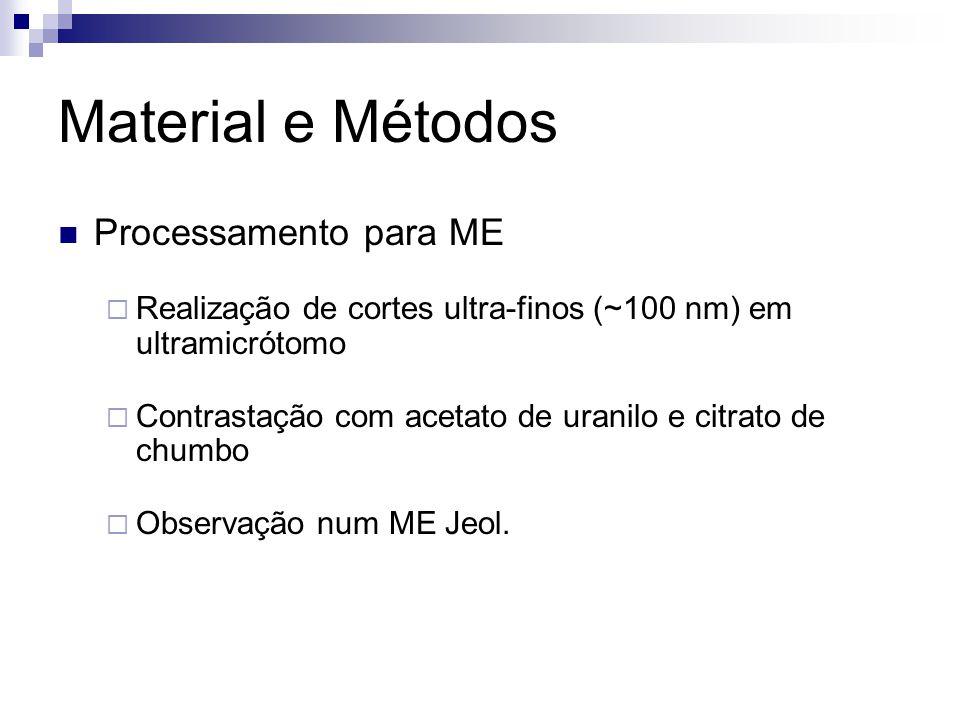 Material e Métodos Processamento para ME Realização de cortes ultra-finos (~100 nm) em ultramicrótomo Contrastação com acetato de uranilo e citrato de chumbo Observação num ME Jeol.
