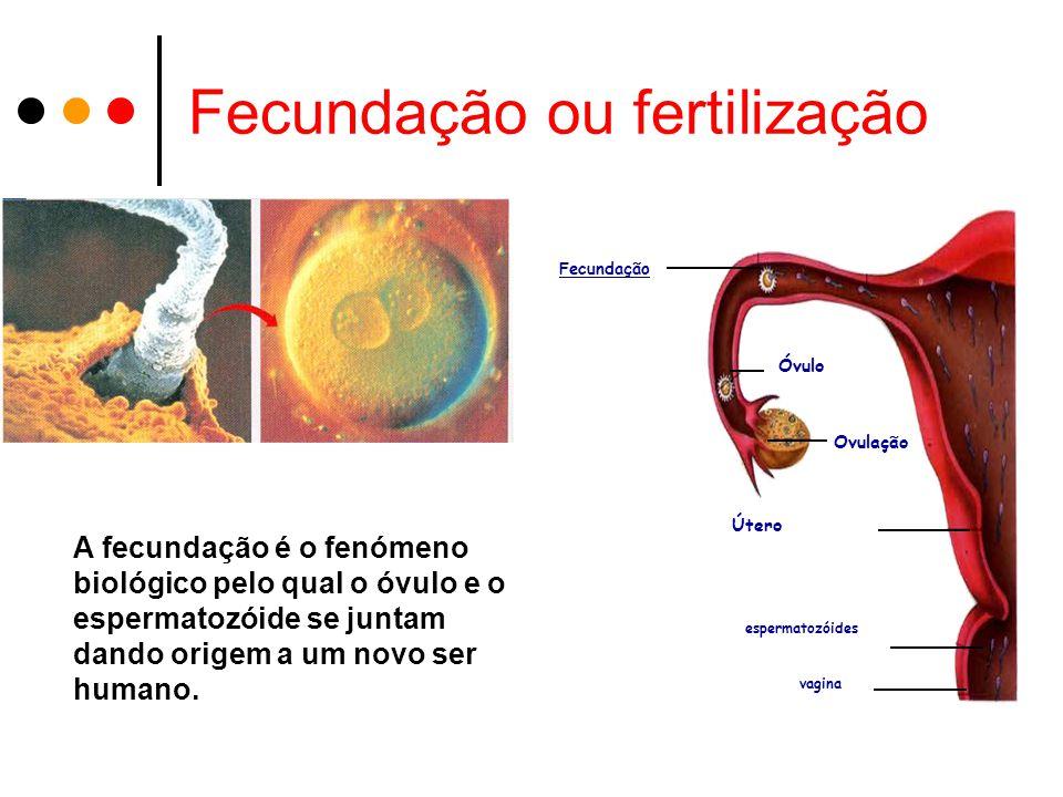 Fecundação ou fertilização A fecundação é o fenómeno biológico pelo qual o óvulo e o espermatozóide se juntam dando origem a um novo ser humano.