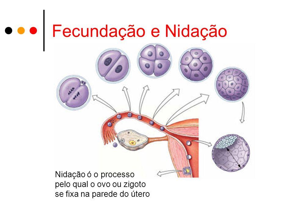 Fecundação e Nidação Nidação ó o processo pelo qual o ovo ou zigoto se fixa na parede do útero