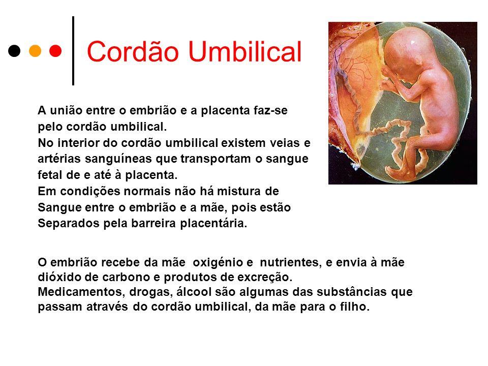 Cordão Umbilical A união entre o embrião e a placenta faz-se pelo cordão umbilical.