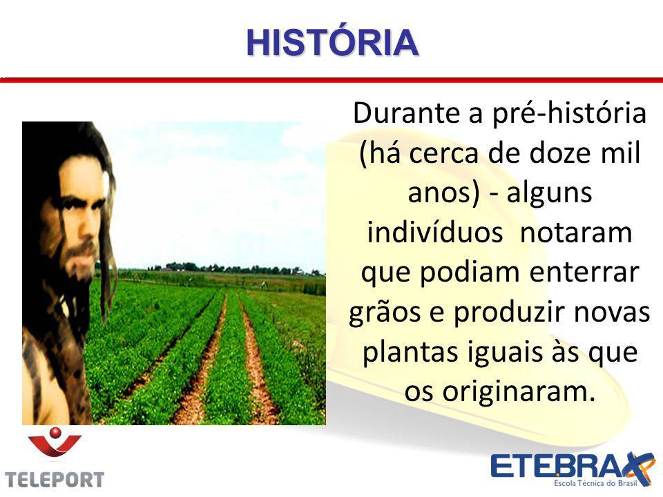 HISTÓRIA Durante a pré-história (há cerca de doze mil anos) - alguns indivíduos notaram que podiam enterrar grãos e produzir novas plantas iguais às q