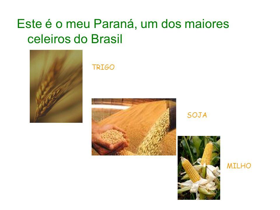 Este é o meu Paraná, um dos maiores celeiros do Brasil TRIGO SOJA MILHO