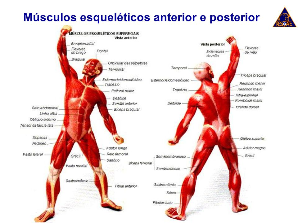 Lesões Ósseas Traumas de extremidades envolvem quatro situações: Hemorragia; Instabilidade; Lesões de tecidos moles; e Perda de tecidos (amputação).