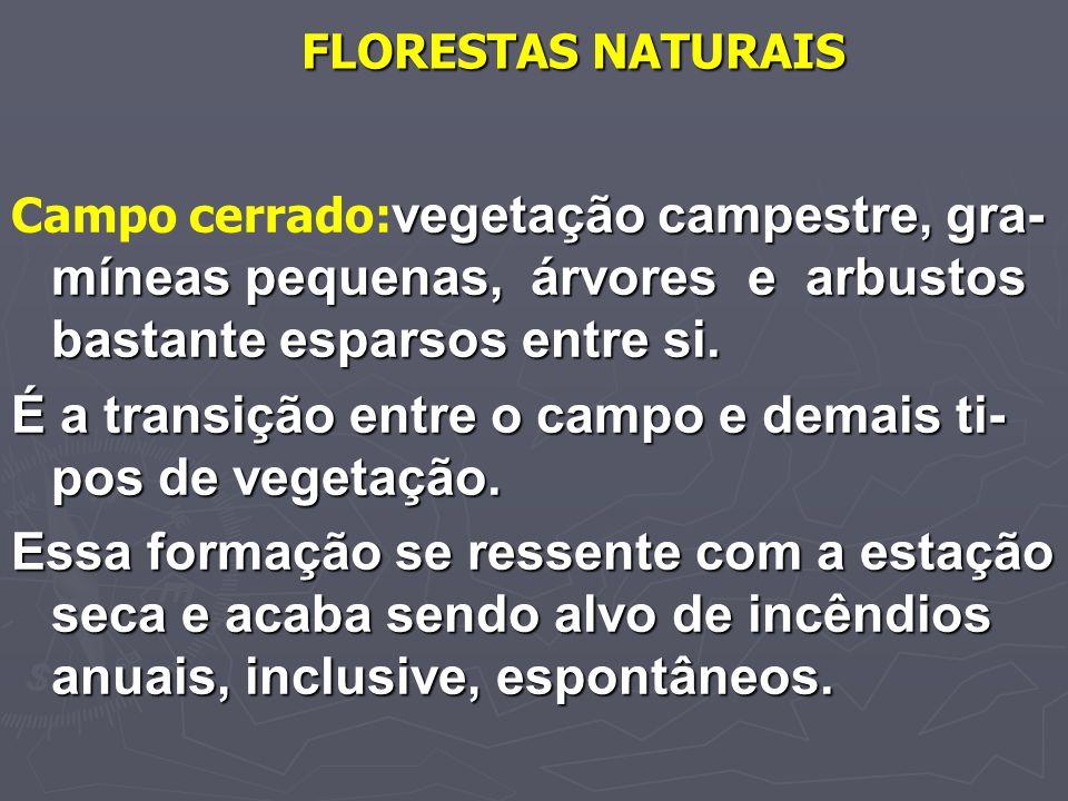 FLORESTAS NATURAIS vegetação campestre, gra- míneas pequenas, árvores e arbustos bastante esparsos entre si. Campo cerrado: vegetação campestre, gra-