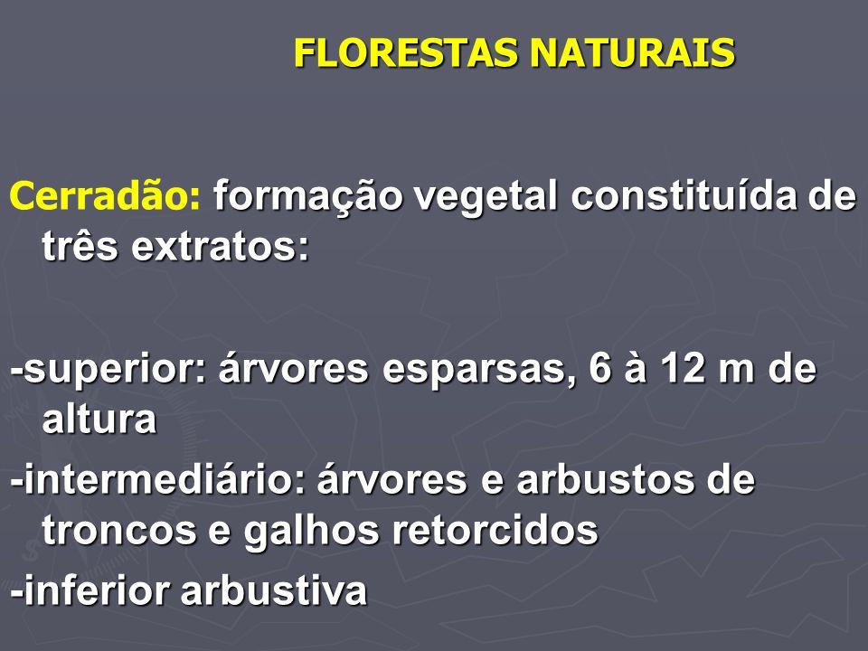 FLORESTAS NATURAIS formação vegetal constituída de três extratos: Cerradão: formação vegetal constituída de três extratos: -superior: árvores esparsas