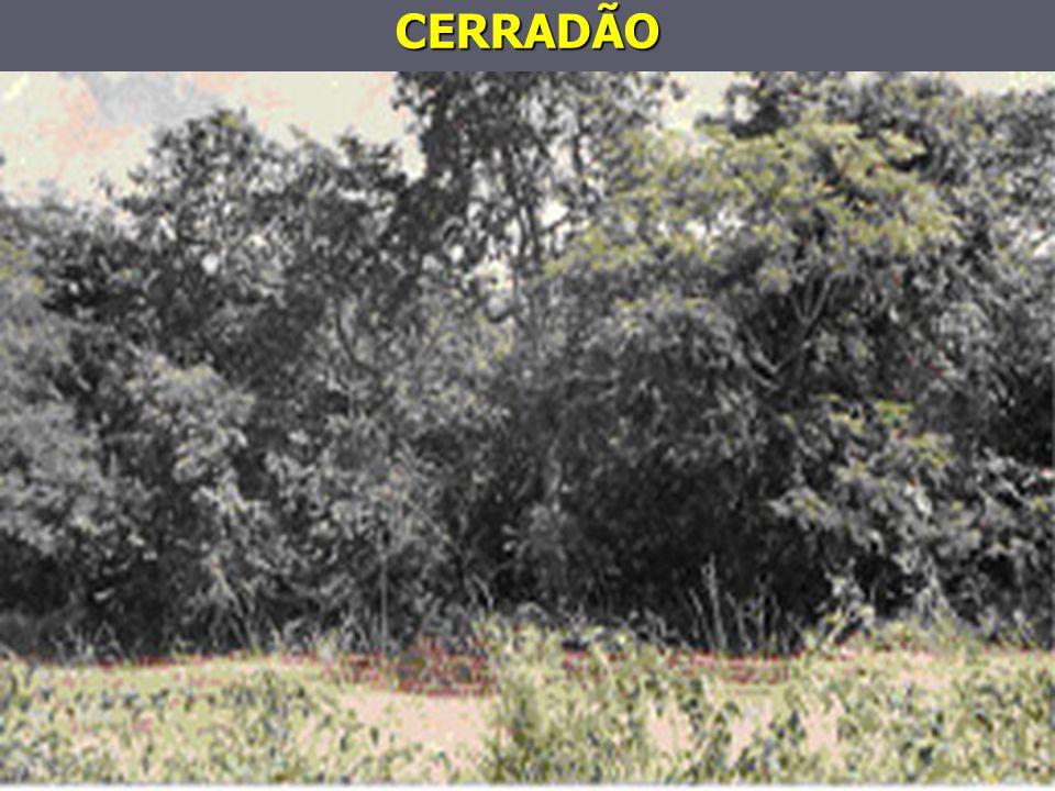CERRADÃO