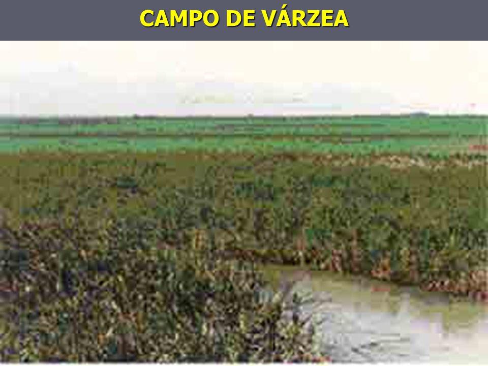 CAMPO DE VÁRZEA