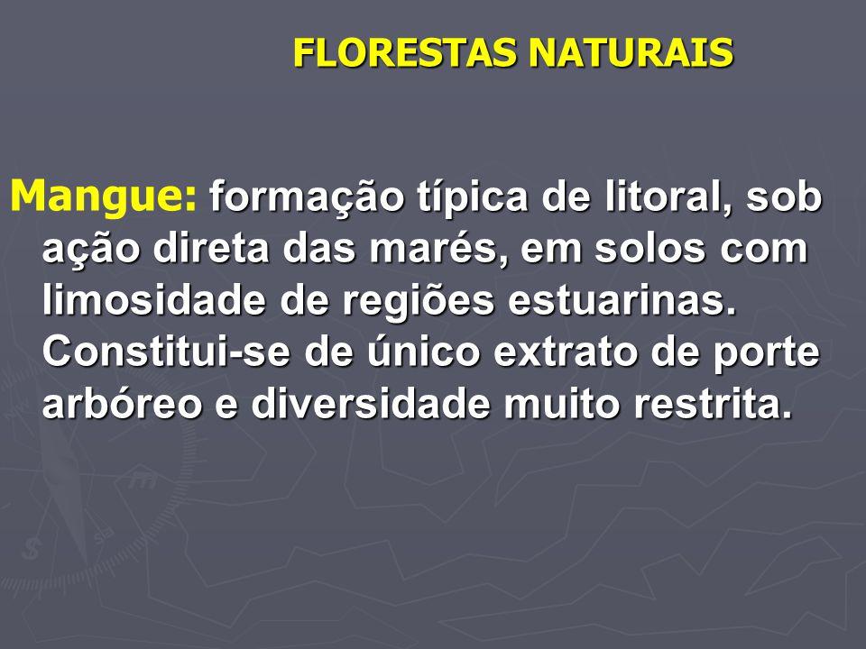 FLORESTAS NATURAIS formação típica de litoral, sob ação direta das marés, em solos com limosidade de regiões estuarinas. Constitui-se de único extrato