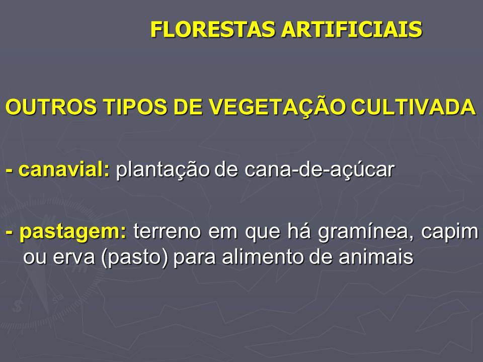 FLORESTAS ARTIFICIAIS OUTROS TIPOS DE VEGETAÇÃO CULTIVADA - canavial: plantação de cana-de-açúcar - pastagem: terreno em que há gramínea, capim ou erv