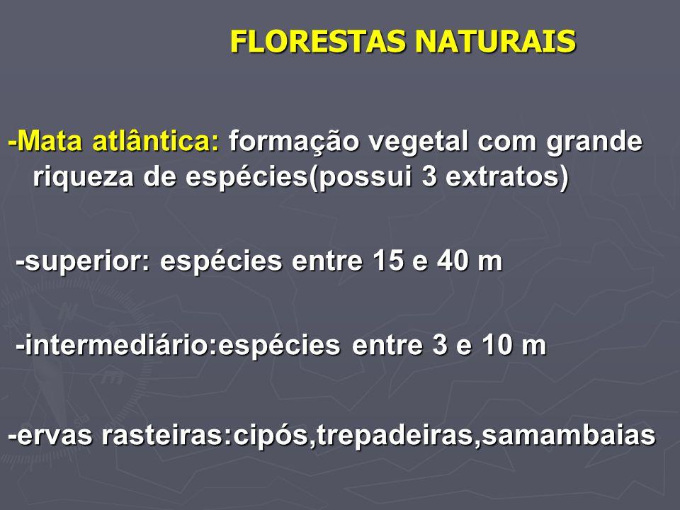 FLORESTAS NATURAIS -Mata atlântica: formação vegetal com grande riqueza de espécies(possui 3 extratos) -superior: espécies entre 15 e 40 m -superior: