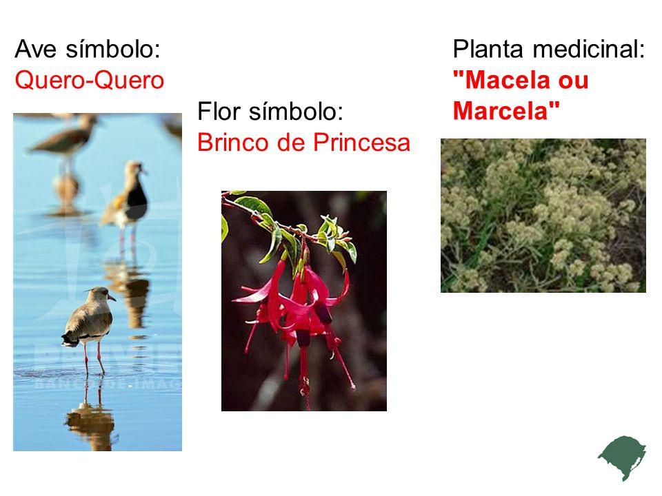 Ave símbolo: Quero-Quero Flor símbolo: Brinco de Princesa Planta medicinal: Macela ou Marcela