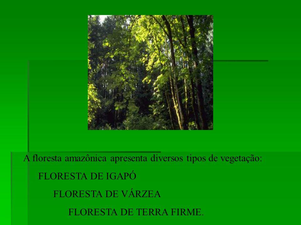 Impressiona a quantidade de água na Amazônia. A floresta é banhada pelo rio Amazonas e seus inúmeros afluentes.