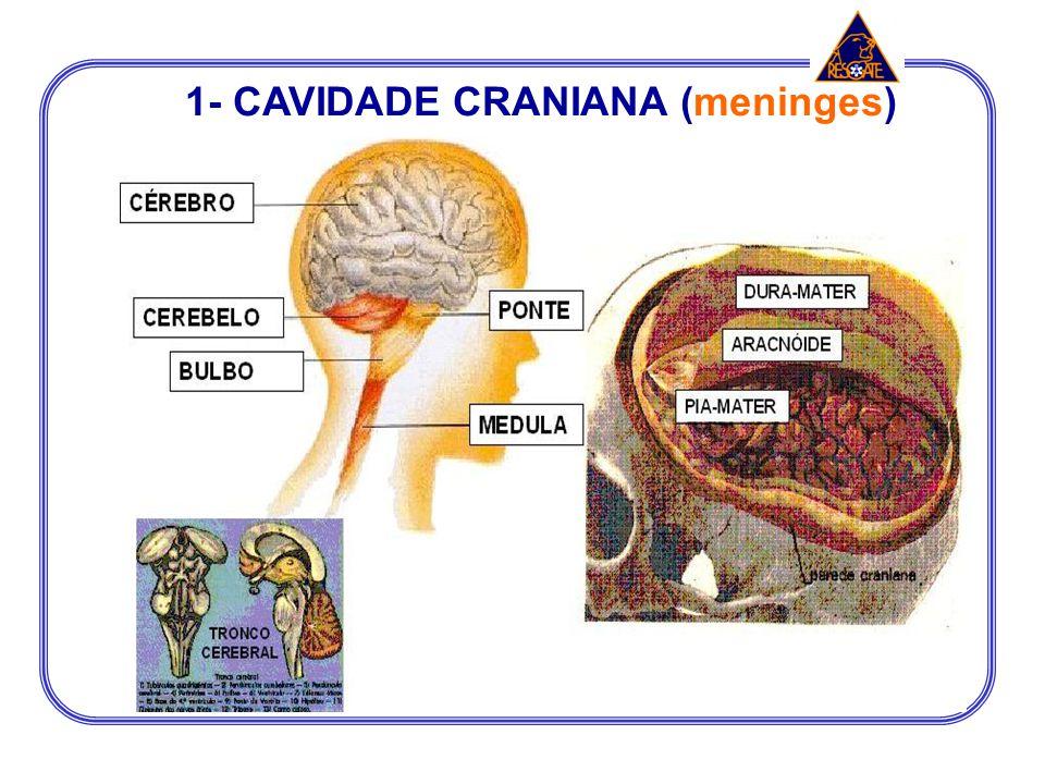 1- CAVIDADE CRANIANA (meninges)