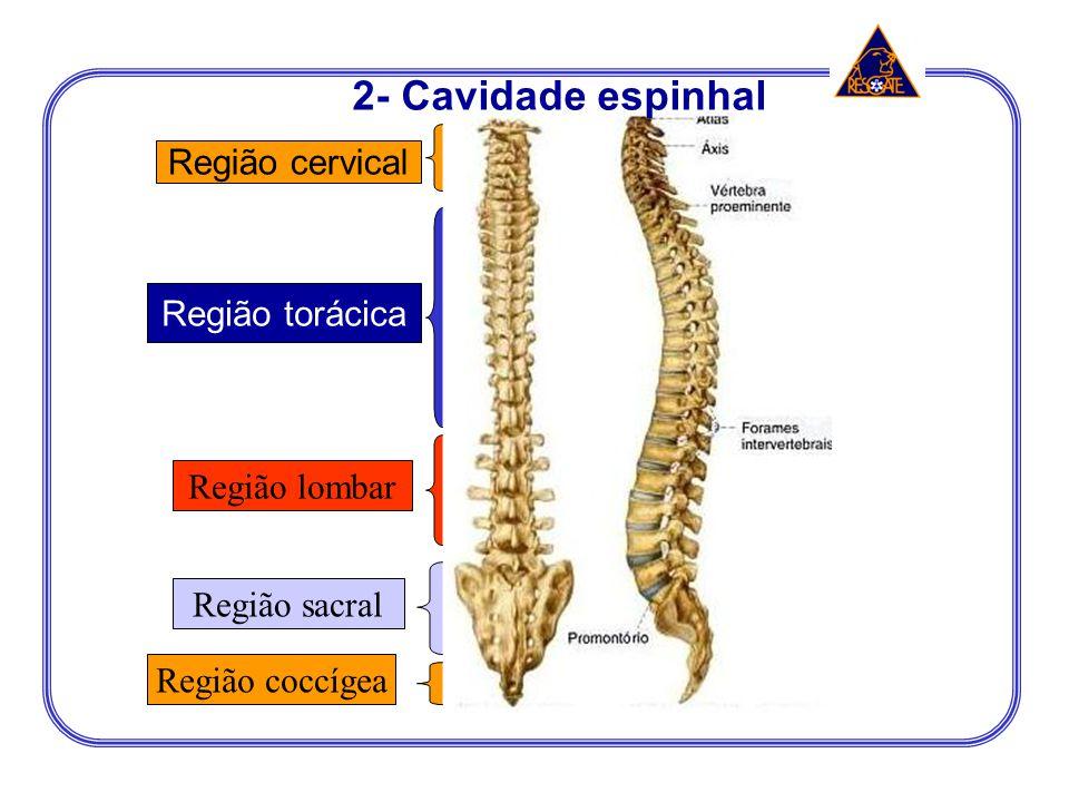 Região cervical Região torácica Região lombar Região sacral Região coccígea 2- Cavidade espinhal