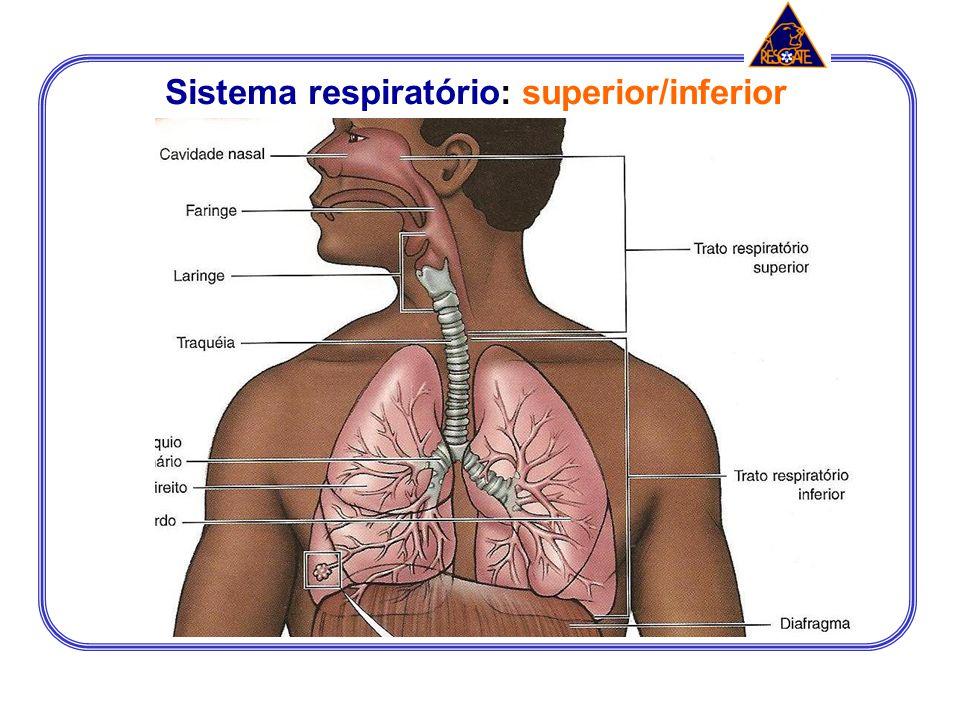 Sistema respiratório: superior/inferior