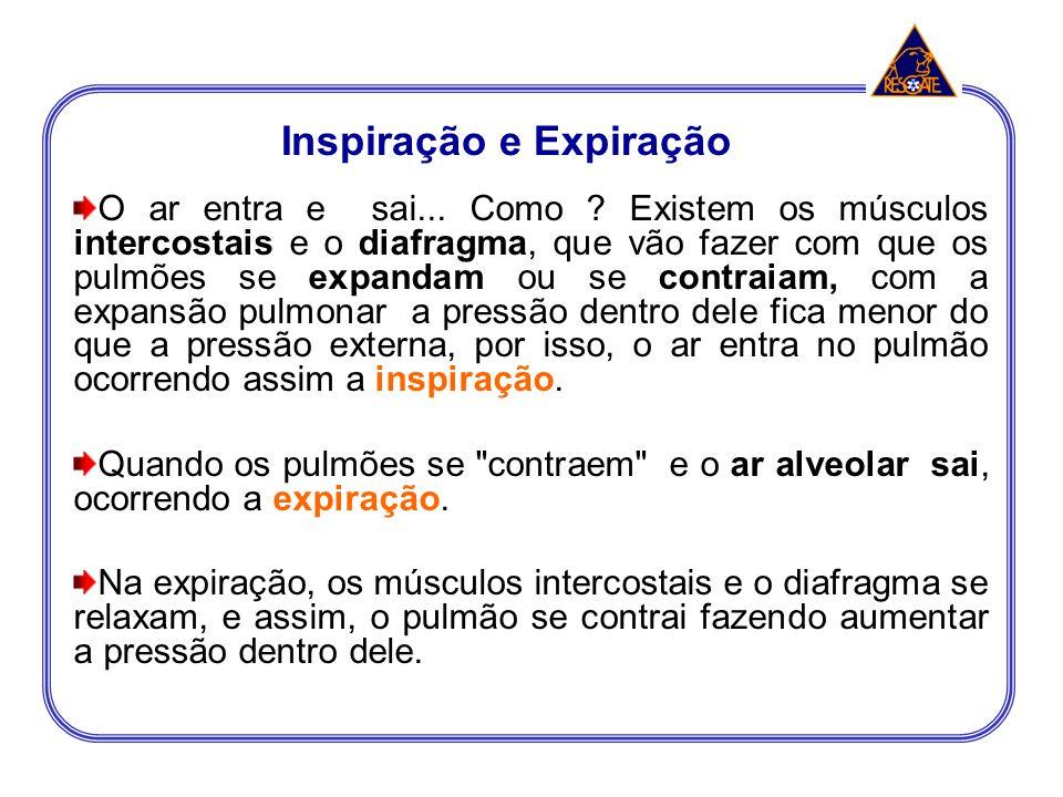 Inspiração e Expiração O ar entra e sai... Como ? Existem os músculos intercostais e o diafragma, que vão fazer com que os pulmões se expandam ou se c