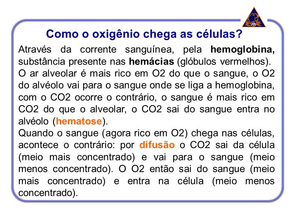 Através da corrente sanguínea, pela hemoglobina, substância presente nas hemácias (glóbulos vermelhos). O ar alveolar é mais rico em O2 do que o sangu