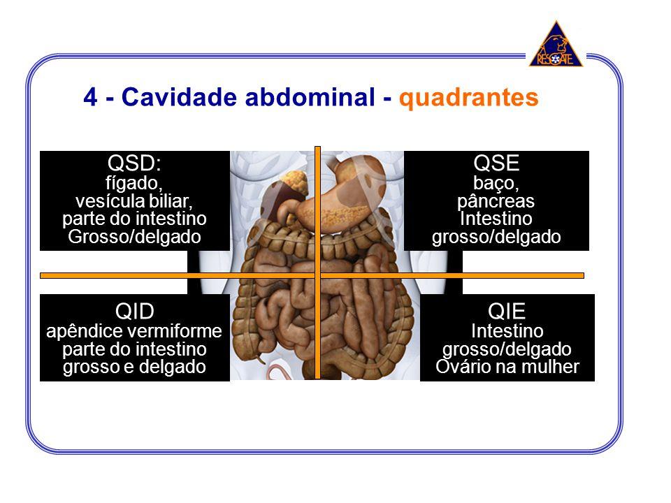 4 - Cavidade abdominal - quadrantes QSD: fígado, vesícula biliar, parte do intestino Grosso/delgado QID apêndice vermiforme parte do intestino grosso