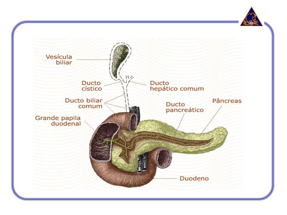 5 - CAVIDADE PÉLVICA órgãos reprodutores feminino e masculino