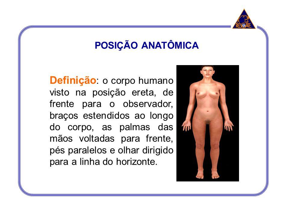POSIÇÃO ANATÔMICA Definição : o corpo humano visto na posição ereta, de frente para o observador, braços estendidos ao longo do corpo, as palmas das m