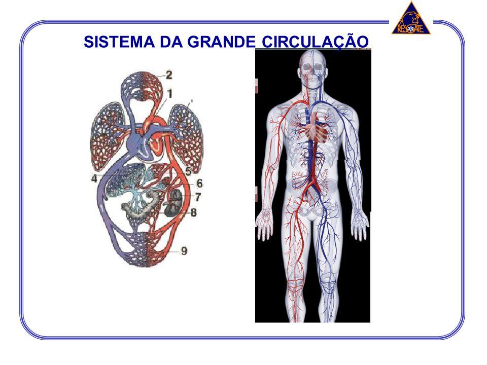 SISTEMA DA GRANDE CIRCULAÇÃO