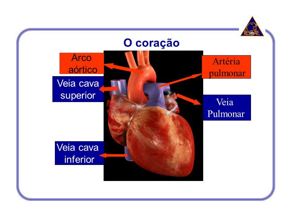 Veia Pulmonar Veia cava superior Veia cava inferior Arco aórtico Artéria pulmonar O coração