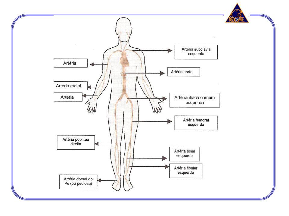 Sistema Tegumentar: pele, unhas e cabelos. Derme Epiderme Hipoderme
