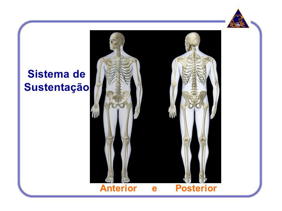 Sistema de Sustentação Anterior e Posterior Axial Apendicular