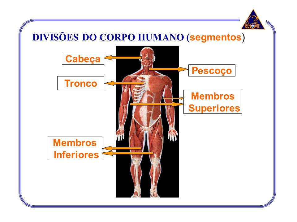 Cabeça Pescoço Tronco Membros Superiores Membros Inferiores DIVISÕES DO CORPO HUMANO ( segmentos)
