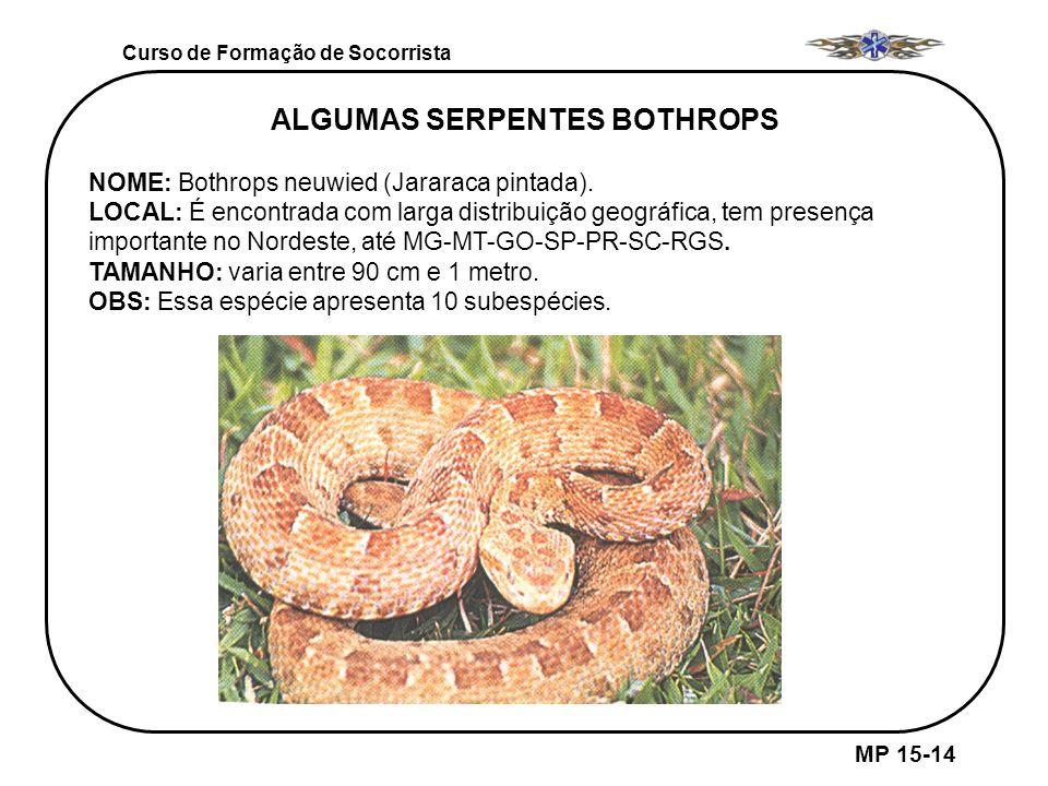 Curso de Formação de Socorrista MP 15-14 ALGUMAS SERPENTES BOTHROPS NOME: Bothrops neuwied (Jararaca pintada). LOCAL: É encontrada com larga distribui