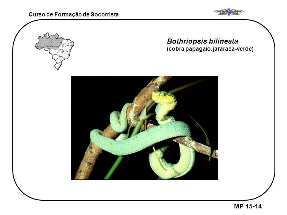 MP 15-14 Curso de Formação de Socorrista Bothriopsis bilineata (cobra papagaio, jararaca-verde)