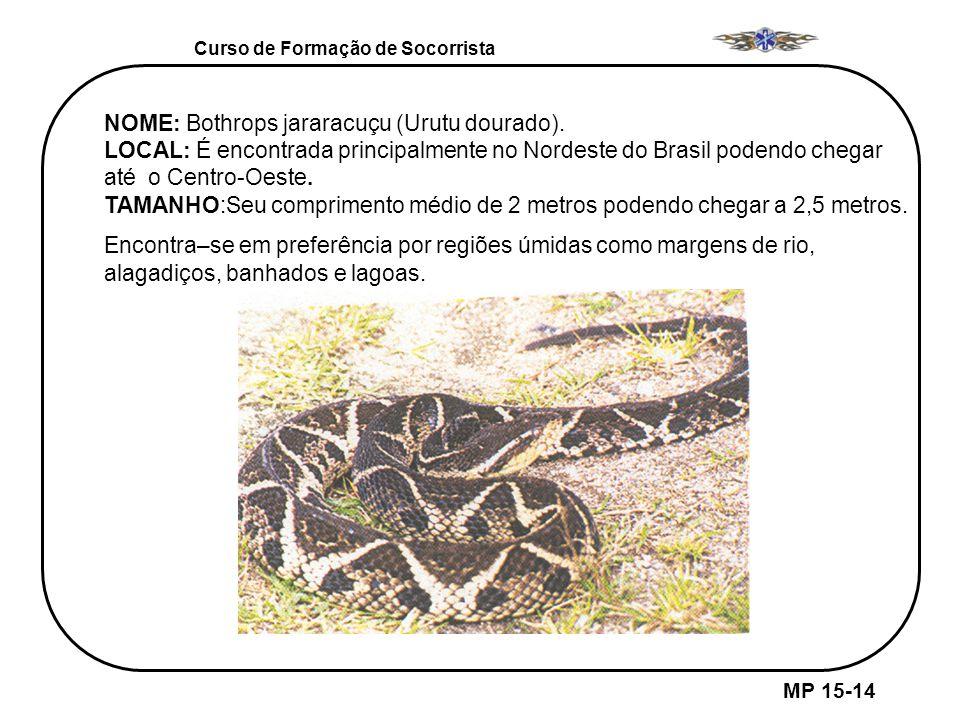 MP 15-14 Curso de Formação de Socorrista NOME: Bothrops jararacuçu (Urutu dourado). LOCAL: É encontrada principalmente no Nordeste do Brasil podendo c