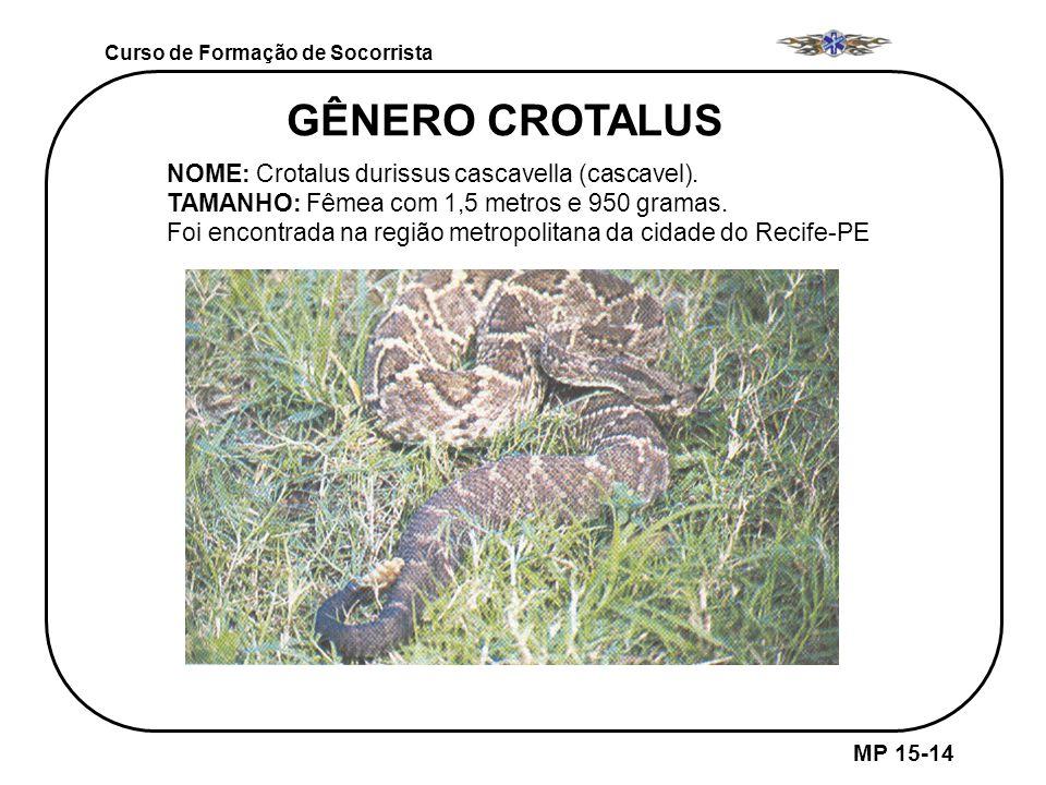 MP 15-14 Curso de Formação de Socorrista GÊNERO CROTALUS NOME: Crotalus durissus cascavella (cascavel). TAMANHO: Fêmea com 1,5 metros e 950 gramas. Fo