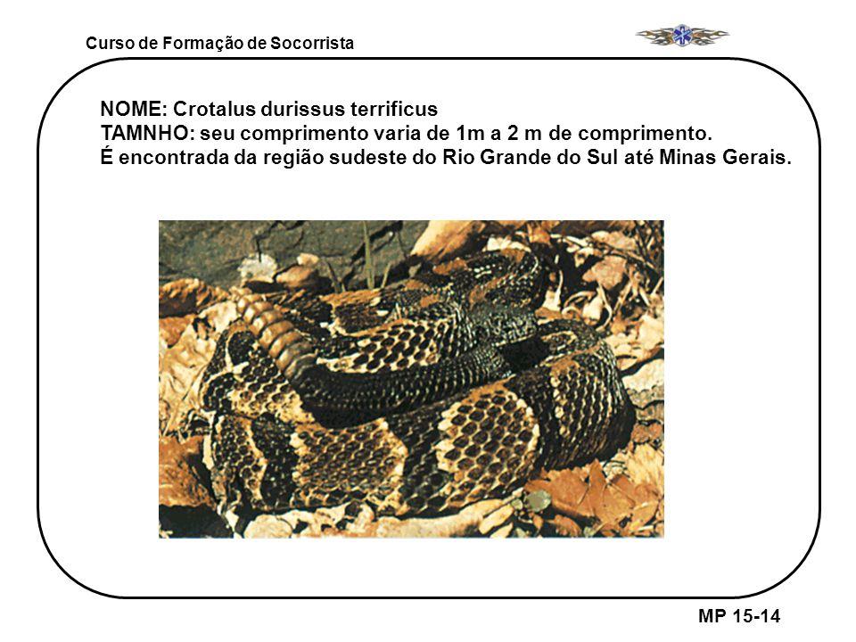 MP 15-14 Curso de Formação de Socorrista NOME: Crotalus durissus terrificus TAMNHO: seu comprimento varia de 1m a 2 m de comprimento. É encontrada da