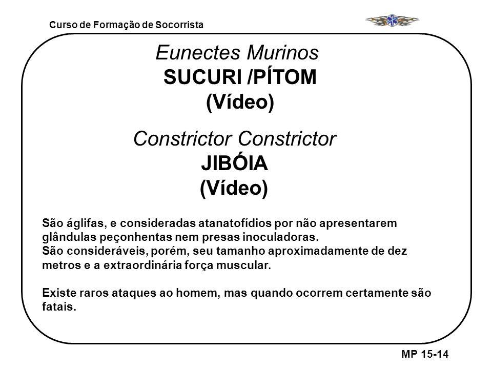 MP 15-14 Curso de Formação de Socorrista Eunectes Murinos SUCURI /PÍTOM (Vídeo) São áglifas, e consideradas atanatofídios por não apresentarem glândul