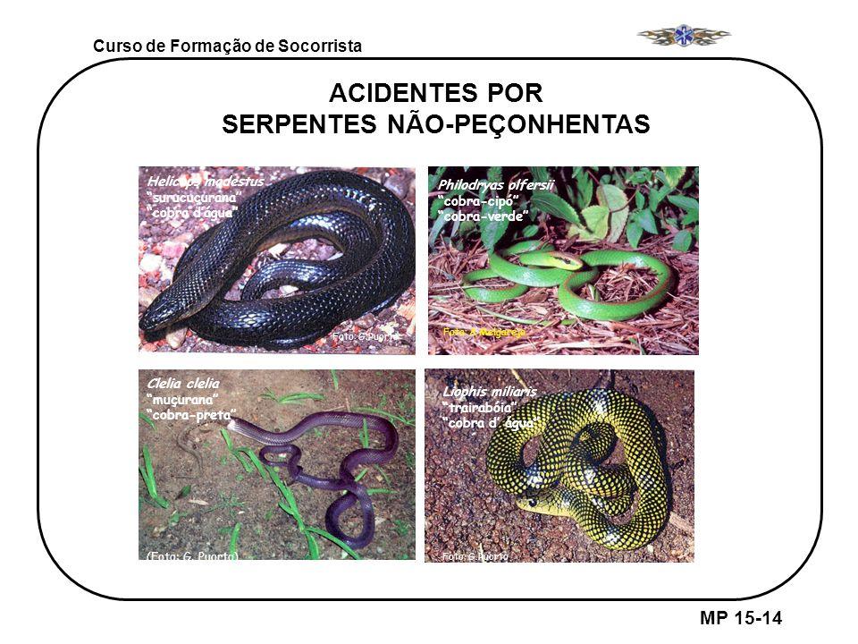 MP 15-14 Curso de Formação de Socorrista ACIDENTES POR SERPENTES NÃO-PEÇONHENTAS Helicops modestus surucucurana cobra dágua Foto: G.Puorto Philodryas