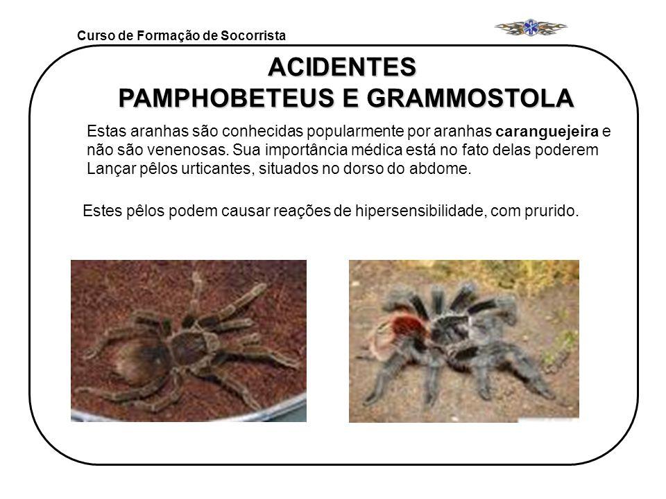 Curso de Formação de Socorrista ACIDENTES PAMPHOBETEUS E GRAMMOSTOLA Estas aranhas são conhecidas popularmente por aranhas caranguejeira e não são ven