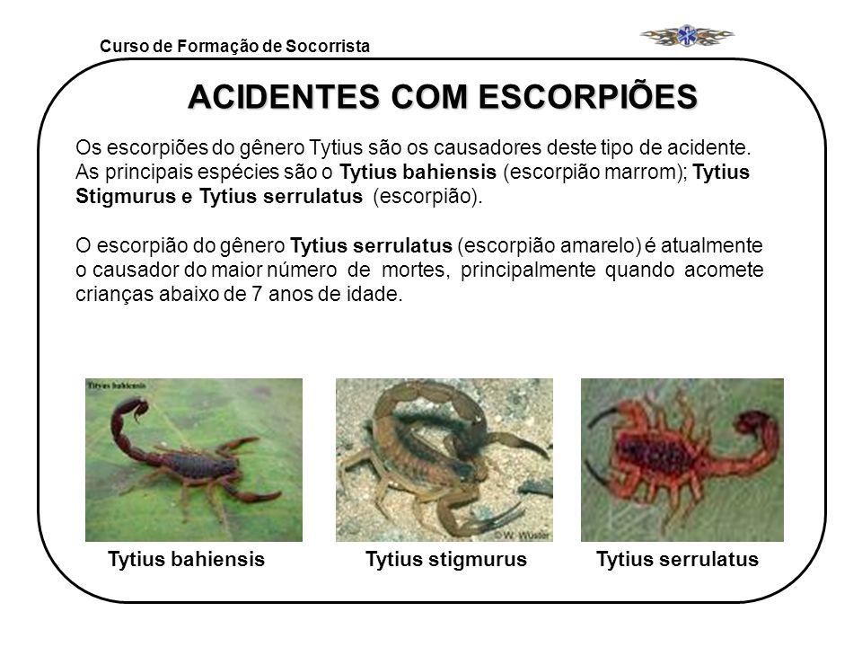 Curso de Formação de Socorrista ACIDENTES COM ESCORPIÕES Os escorpiões do gênero Tytius são os causadores deste tipo de acidente. As principais espéci
