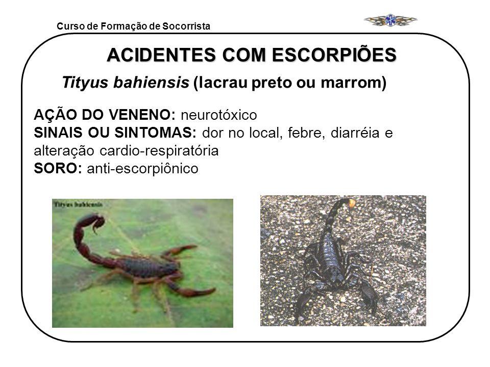 Curso de Formação de Socorrista ACIDENTES COM ESCORPIÕES Tityus bahiensis (lacrau preto ou marrom) AÇÃO DO VENENO: neurotóxico SINAIS OU SINTOMAS: dor