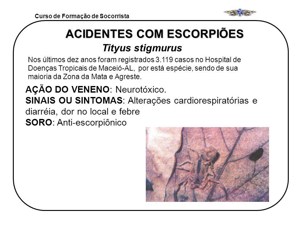 Curso de Formação de Socorrista GÊNERO Tityus stigmurus ACIDENTES COM ESCORPIÕES Tityus stigmurus Nos últimos dez anos foram registrados 3.119 casos n