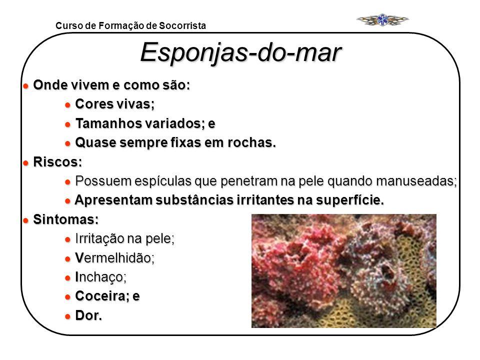 Curso de Formação de Socorrista Esponjas-do-mar Onde vivem e como são: Onde vivem e como são: Cores vivas; Cores vivas; Tamanhos variados; e Tamanhos