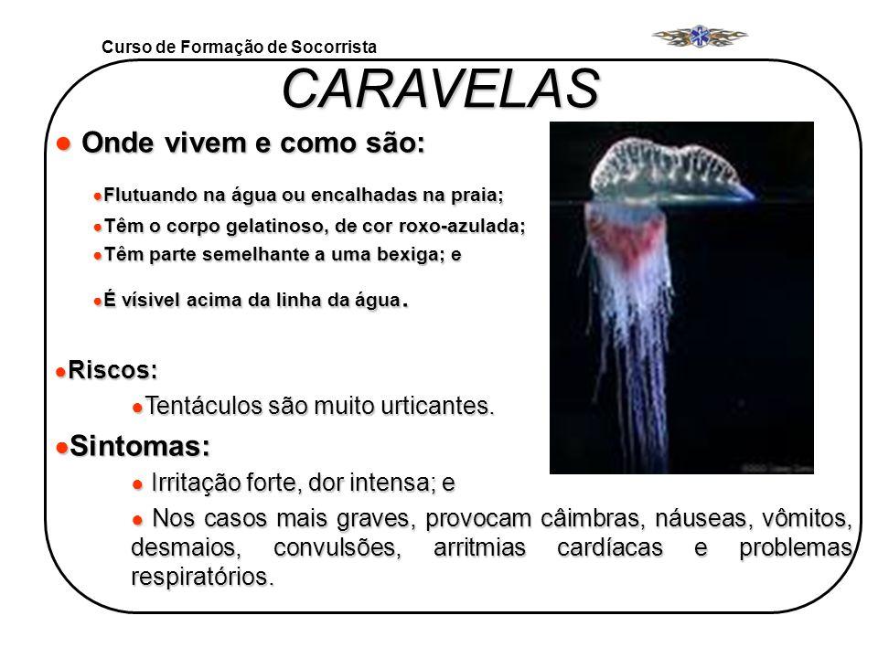 Curso de Formação de Socorrista CARAVELAS Onde vivem e como são: Onde vivem e como são: Flutuando na água ou encalhadas na praia; Flutuando na água ou