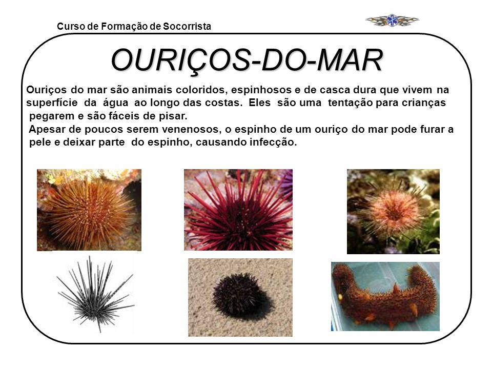 OURIÇOS-DO-MAR Curso de Formação de Socorrista Ouriços do mar são animais coloridos, espinhosos e de casca dura que vivem na superfície da água ao lon