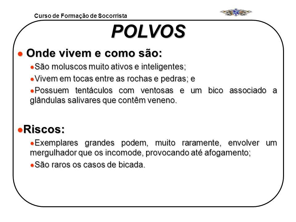 Curso de Formação de Socorrista POLVOS Onde vivem e como são: Onde vivem e como são: São moluscos muito ativos e inteligentes; São moluscos muito ativ
