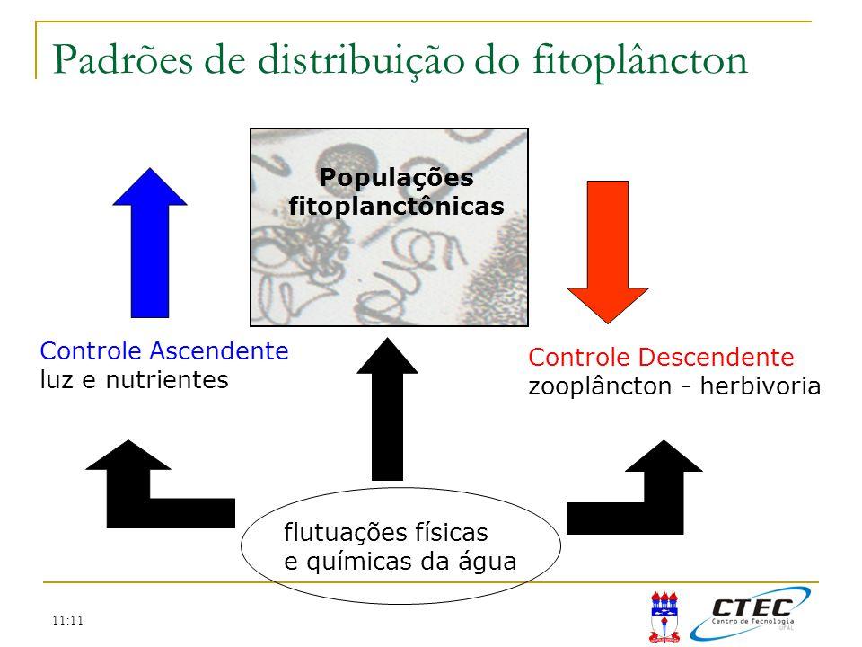11:11 Padrões de distribuição do fitoplâncton Populações fitoplanctônicas flutuações físicas e químicas da água Controle Ascendente luz e nutrientes C