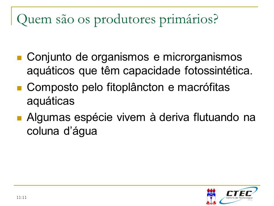 11:11 Quem são os produtores primários? Conjunto de organismos e microrganismos aquáticos que têm capacidade fotossintética. Composto pelo fitoplâncto