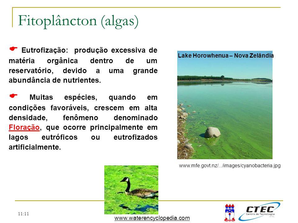 11:11 Fitoplâncton (algas) Eutrofização: produção excessiva de matéria orgânica dentro de um reservatório, devido a uma grande abundância de nutriente