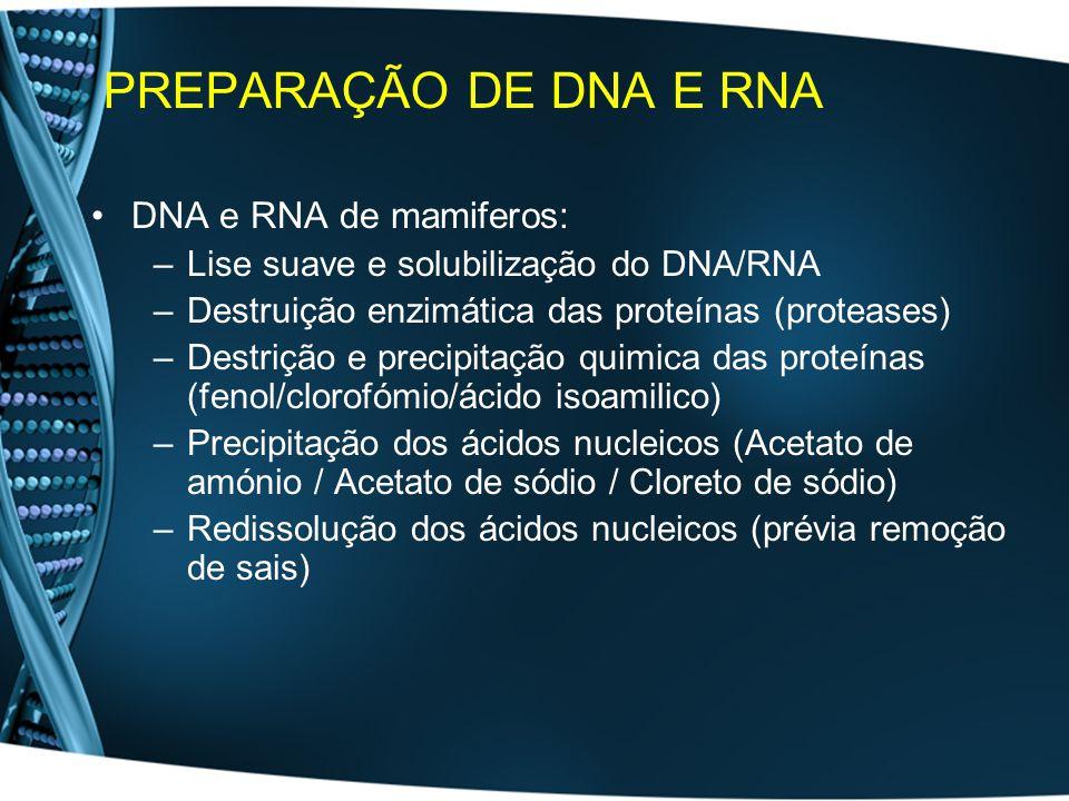 PREPARAÇÃO DE DNA E RNA DNA e RNA de mamiferos: –Lise suave e solubilização do DNA/RNA –Destruição enzimática das proteínas (proteases) –Destrição e precipitação quimica das proteínas (fenol/clorofómio/ácido isoamilico) –Precipitação dos ácidos nucleicos (Acetato de amónio / Acetato de sódio / Cloreto de sódio) –Redissolução dos ácidos nucleicos (prévia remoção de sais)