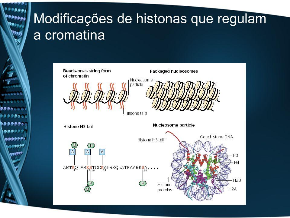 Modificações de histonas que regulam a cromatina