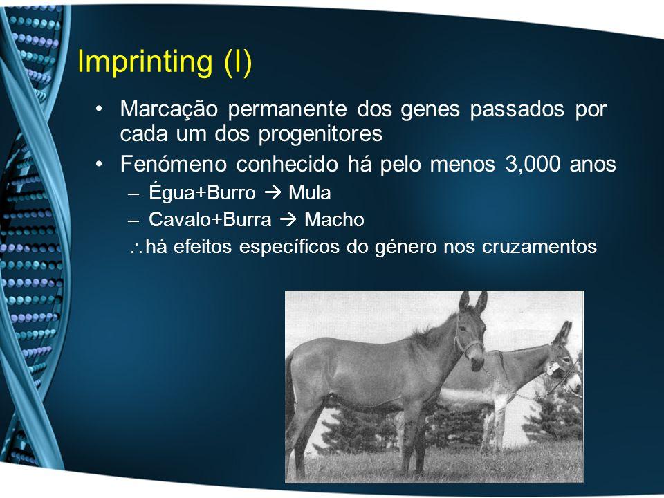 Imprinting (I) Marcação permanente dos genes passados por cada um dos progenitores Fenómeno conhecido há pelo menos 3,000 anos –Égua+Burro Mula –Cavalo+Burra Macho há efeitos específicos do género nos cruzamentos